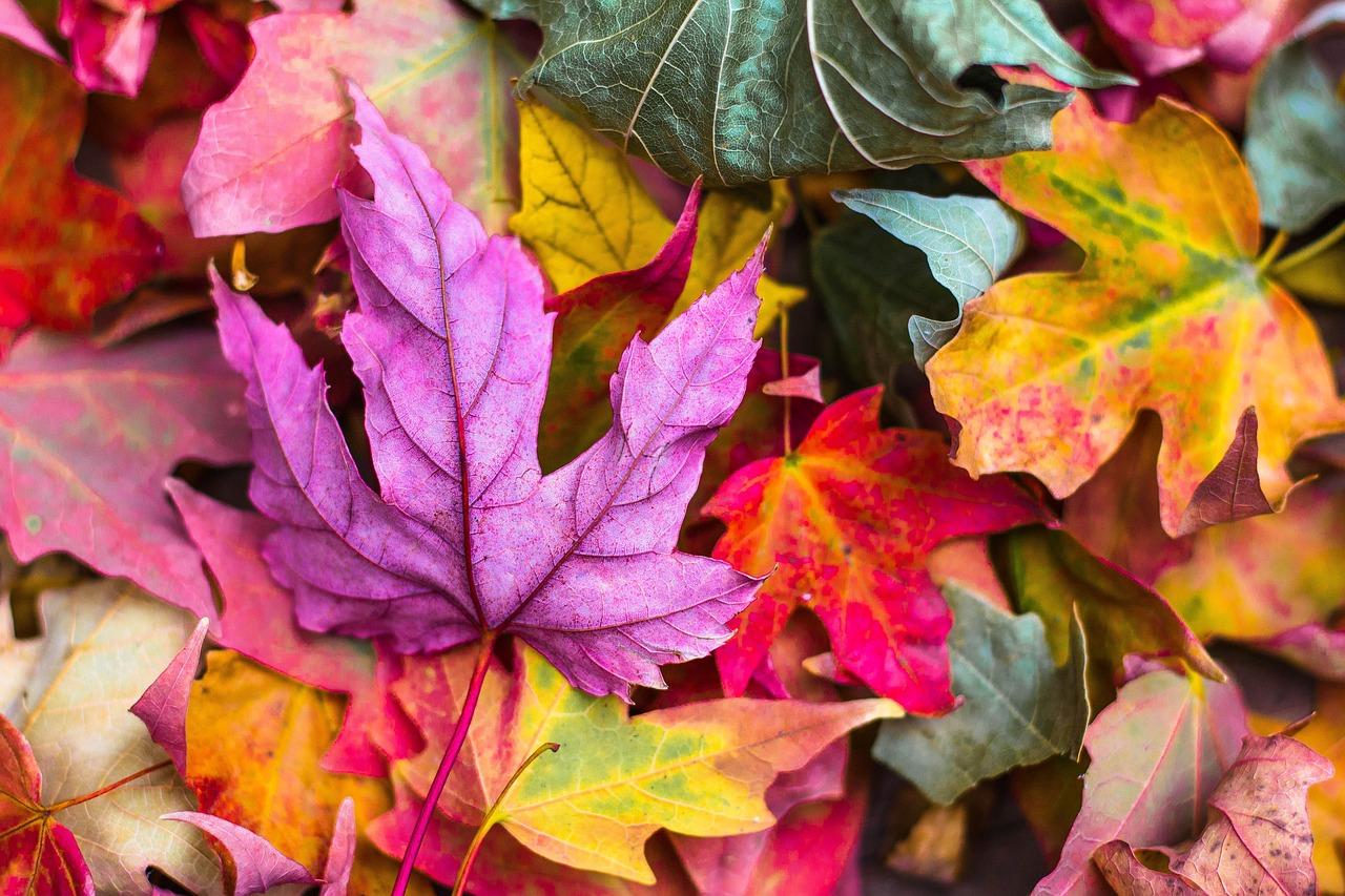 barevné podzimní listí