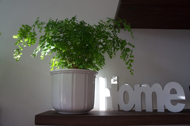 Květiny váš domov probudí k životu