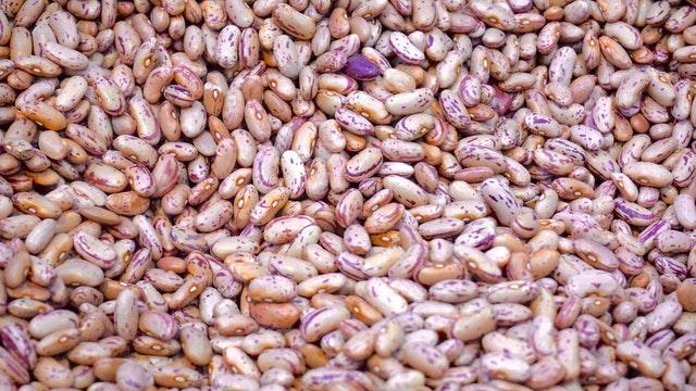 Klíčení semínek vás bude bavit, a na své úrodě si báječně pochutnáte!